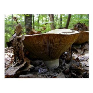 Mushroom 161 ~ postcard