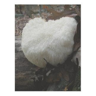 Mushroom Bearded Tooth  (Hericium erinaceus) Postcard