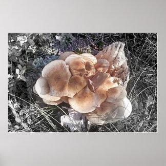 Mushroom Bloom Poster