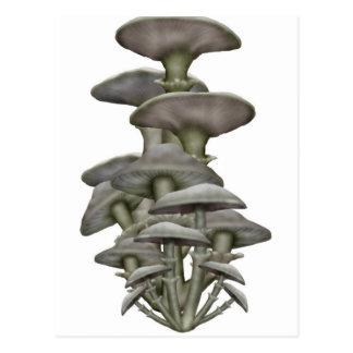 Mushroom Club Postcard
