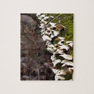 mushroom_downed tree_moss_winter jigsaw puzzle