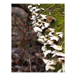 mushroom_downed tree_moss_winter letterhead