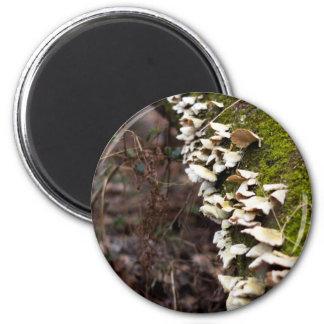 mushroom_downed tree_moss_winter magnet