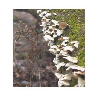 mushroom_downed tree_moss_winter notepad