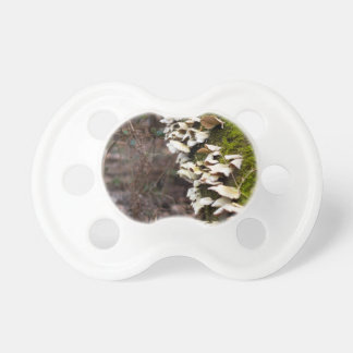 mushroom_downed tree_moss_winter pacifier