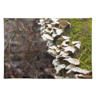 mushroom_downed tree_moss_winter placemat
