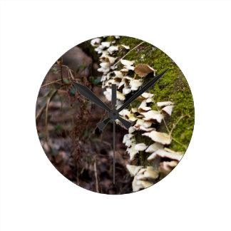 mushroom_downed tree_moss_winter round clock