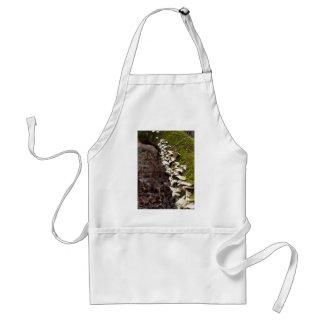 mushroom_downed tree_moss_winter standard apron