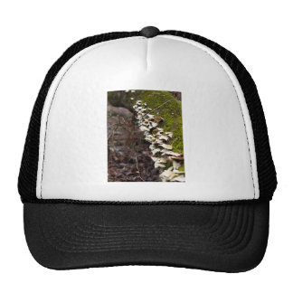 mushroom_downed tree_moss_winter trucker hat