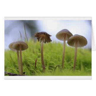Mushroom Family in Moss Card