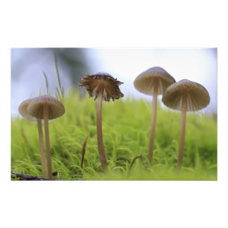 Mushroom Family in Moss Photo Print