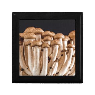 mushroom gift boxes