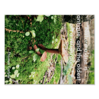 Mushroom is art poster