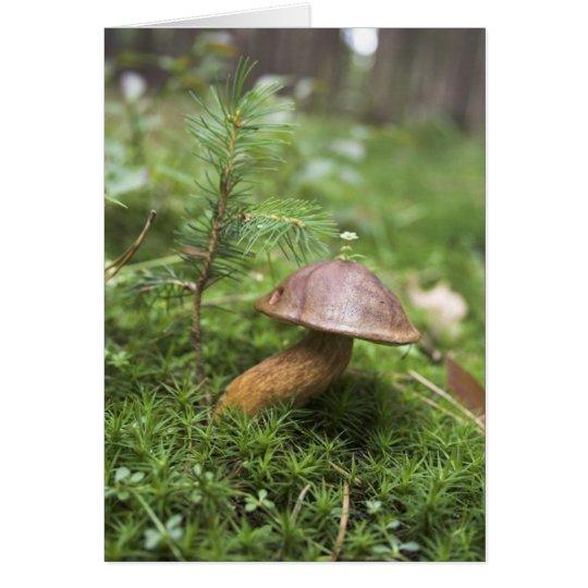 Mushroom On Moss Card