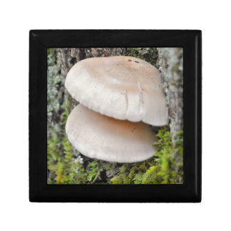 Mushroom Pair Gift Box