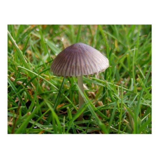 Mushroom Postcard