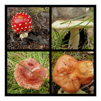 Mushrooms Four Panel Collage Poster
