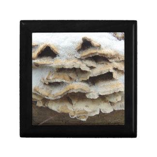 Mushrooms In Winter Gift Box