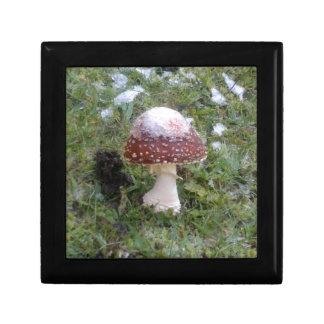 Mushrooms Jewelry Box