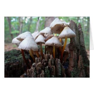 Mushrooms on an Old Stump Notecard