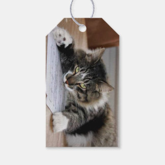 Musical Cat Gift Tags Pack Of Gift Tags
