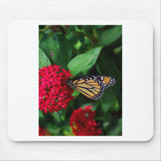 Musing Monarch Mouse Pad