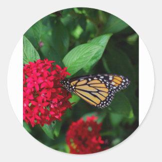 Musing Monarch Round Sticker