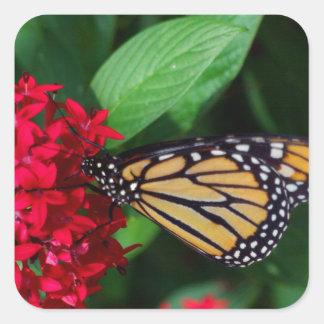 Musing Monarch Square Sticker