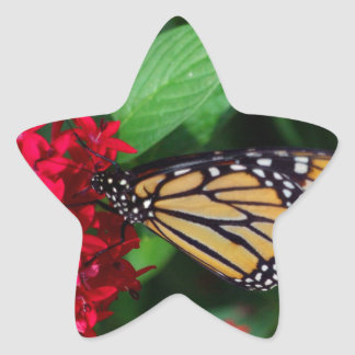 Musing Monarch Star Sticker
