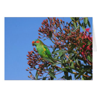 Musk Lorikeet Card