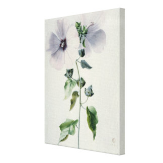 Musk Mallow, 18th century Canvas Print
