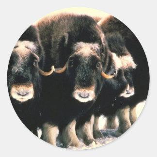 Musk Oxen Round Sticker
