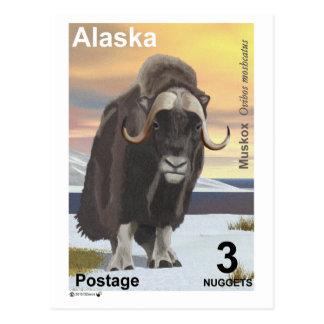 Muskox Postcard