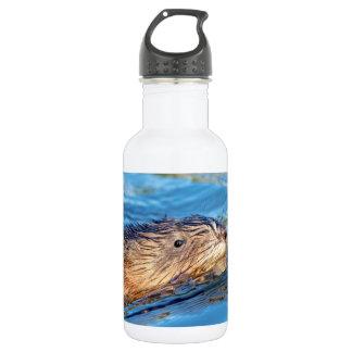 Muskrat at Vassar Farms Ecological Preserve 532 Ml Water Bottle