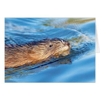 Muskrat at Vassar Farms Ecological Preserve Card