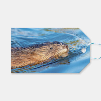 Muskrat at Vassar Farms Ecological Preserve Gift Tags