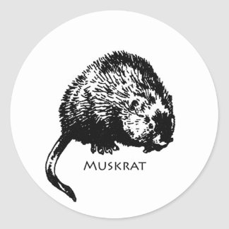 Muskrat (illustration) round sticker