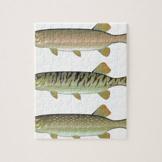 Musky Tiger musky and Northern Pike vector Jigsaw Puzzle