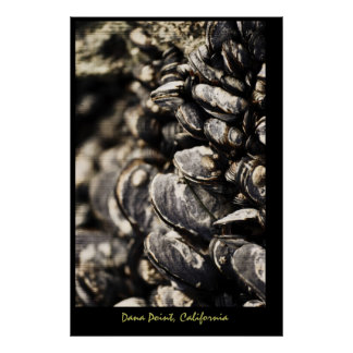 Mussels, Dana Point, California Poster