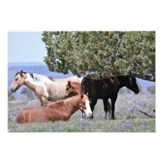 "Mustang Charm 19"" x 13"" Pro. Photo Paper Satin"
