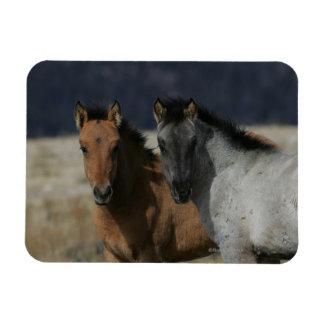 Mustang Foal Headshot Rectangular Photo Magnet