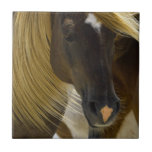 Mustang Horse Photo Trivet Tiles