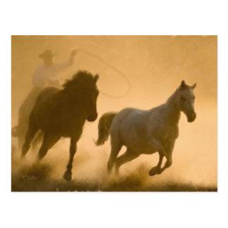 Mustang Roundup Postcard