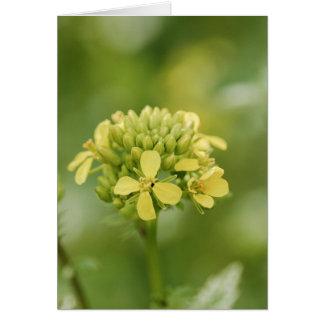 Mustard plant card