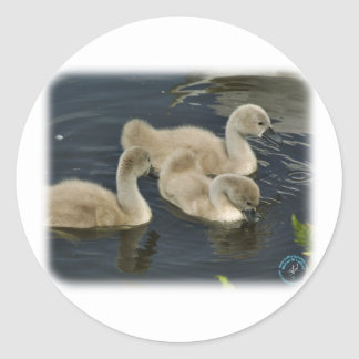 Mute Swan Cygnets 9R054D-110 Classic Round Sticker