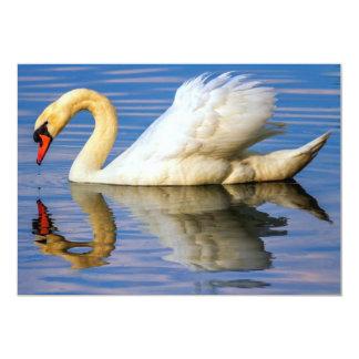 Mute swan, cygnus olor card