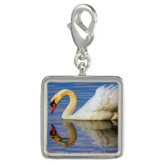 Mute swan, cygnus olor charm