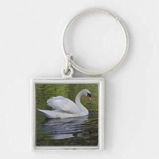 Mute Swan (Cygnus olor) Louisville, Kentucky 2 Keychain
