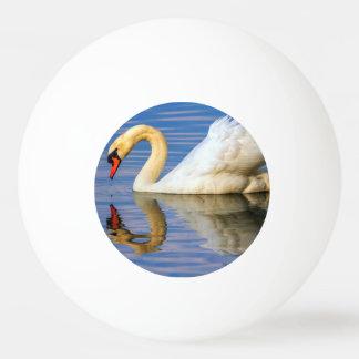 Mute swan, cygnus olor ping pong ball