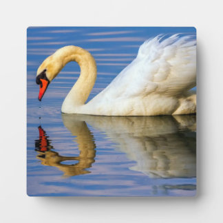 Mute swan, cygnus olor plaque